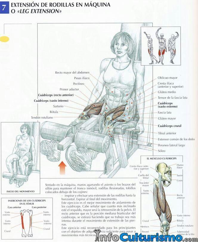 Extensión de rodillas, anatomía. Personal Trainer en Valencia www ...