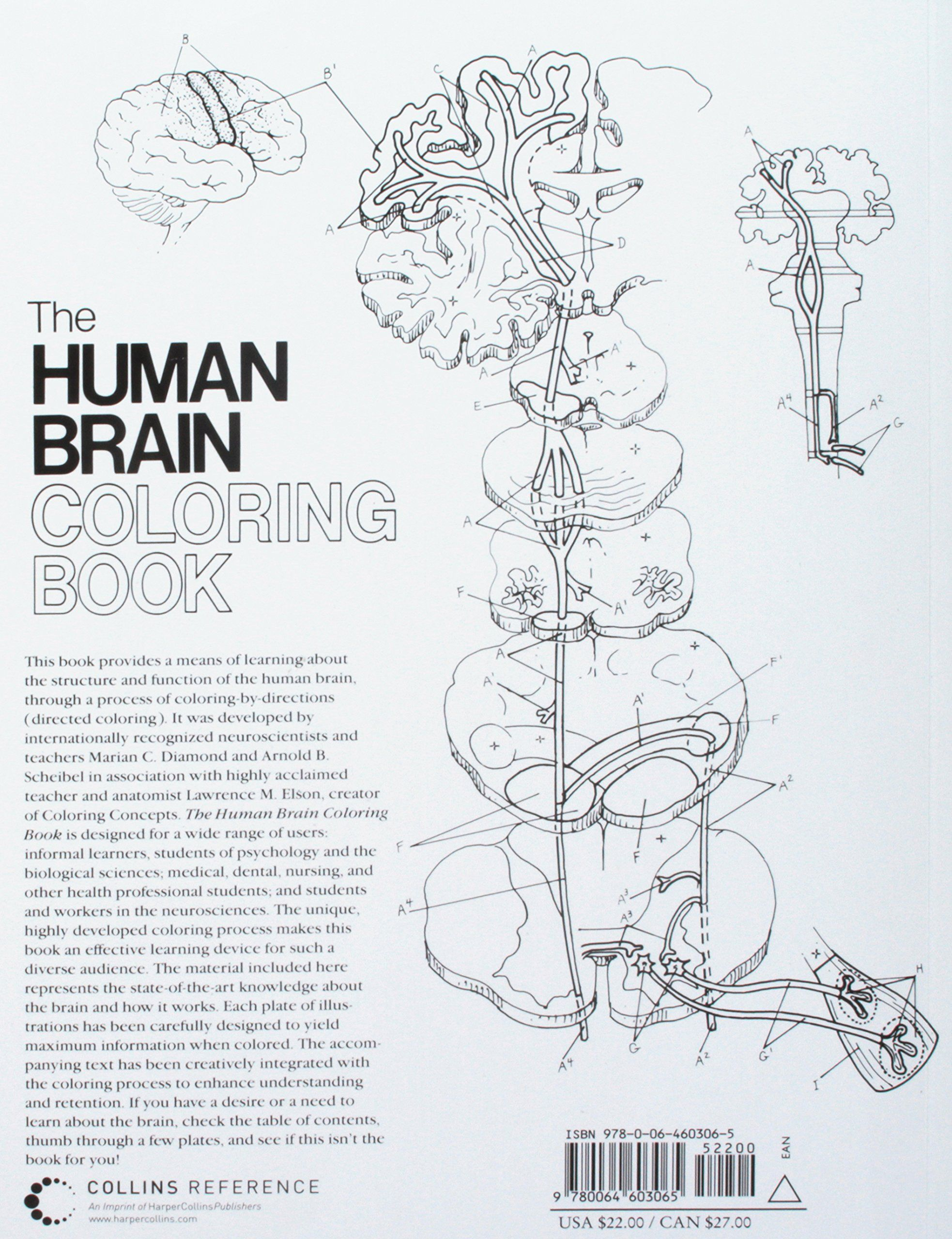 The Human Brain Coloring Book Coloring Concepts Series #Ad ...