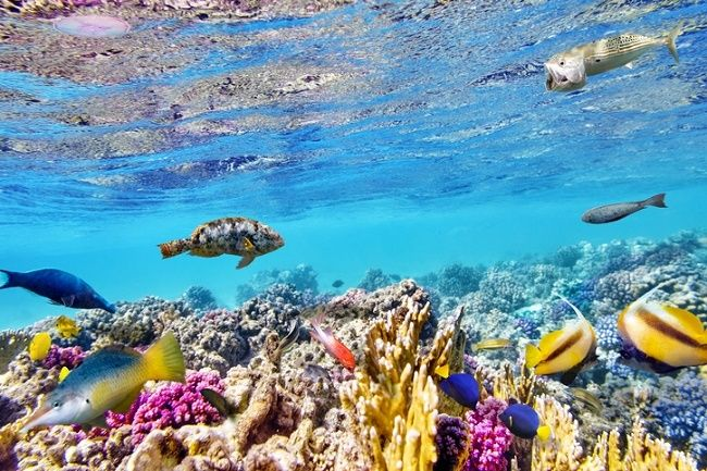 5 Reasons Snorkeling on Maui Ranks High http://www.reservehawaii.com/travelguide/reasons-maui-snorkeling-ranks-high/ #ReserveHawaii