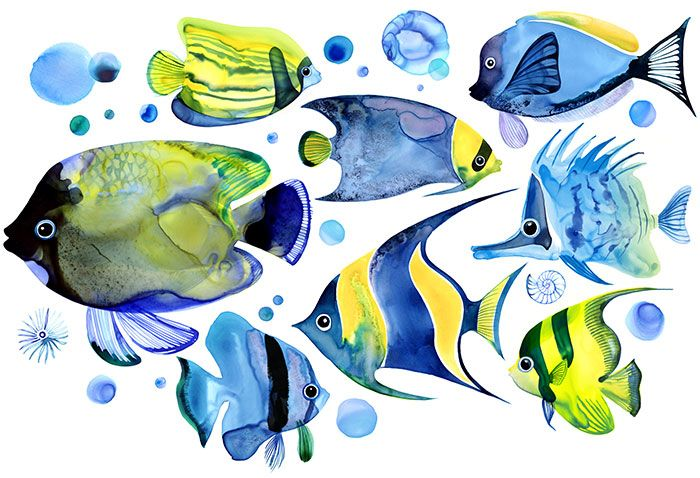 Margaret Berg Art Tropical Fish Blue Watercolor Fish Fish Art