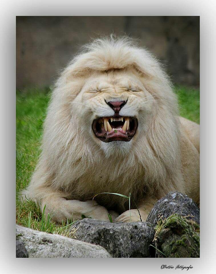 """The """"Kekoa"""" drunken smile.  Love it!!!"""