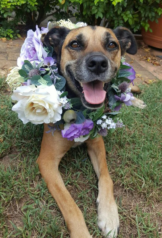 dog puppy flower crown dog puppy flower collar flower garland for dogs roses and australian native flowers and foliage