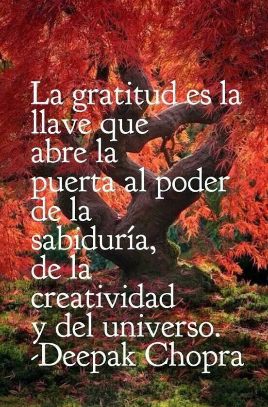 Gracias Imagenes De Agradecimiento Gratitud Palabras De Sabiduria