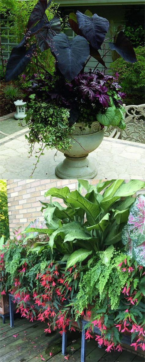 16 Colorful Shade Garden Pots And Plant Lists Shade Plants