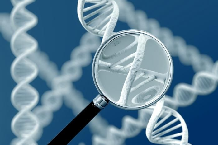 Twelve new genetic causes for rare developmental disorders discovered. Strand of DNA under a magnifying glass in photo.
