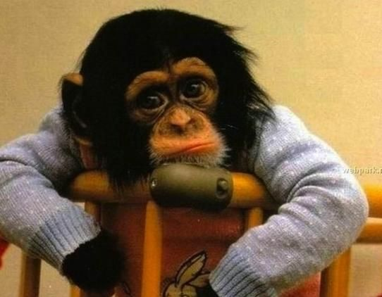 これは可愛くないわけがない パジャマ姿の動物たちに思いっきりメロメロしちゃってください チンパンジー 動物 可愛い 動物