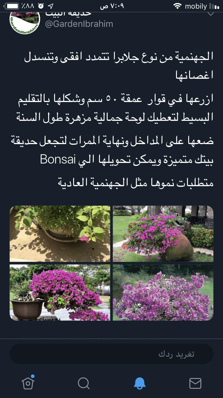 Pin On نباتات