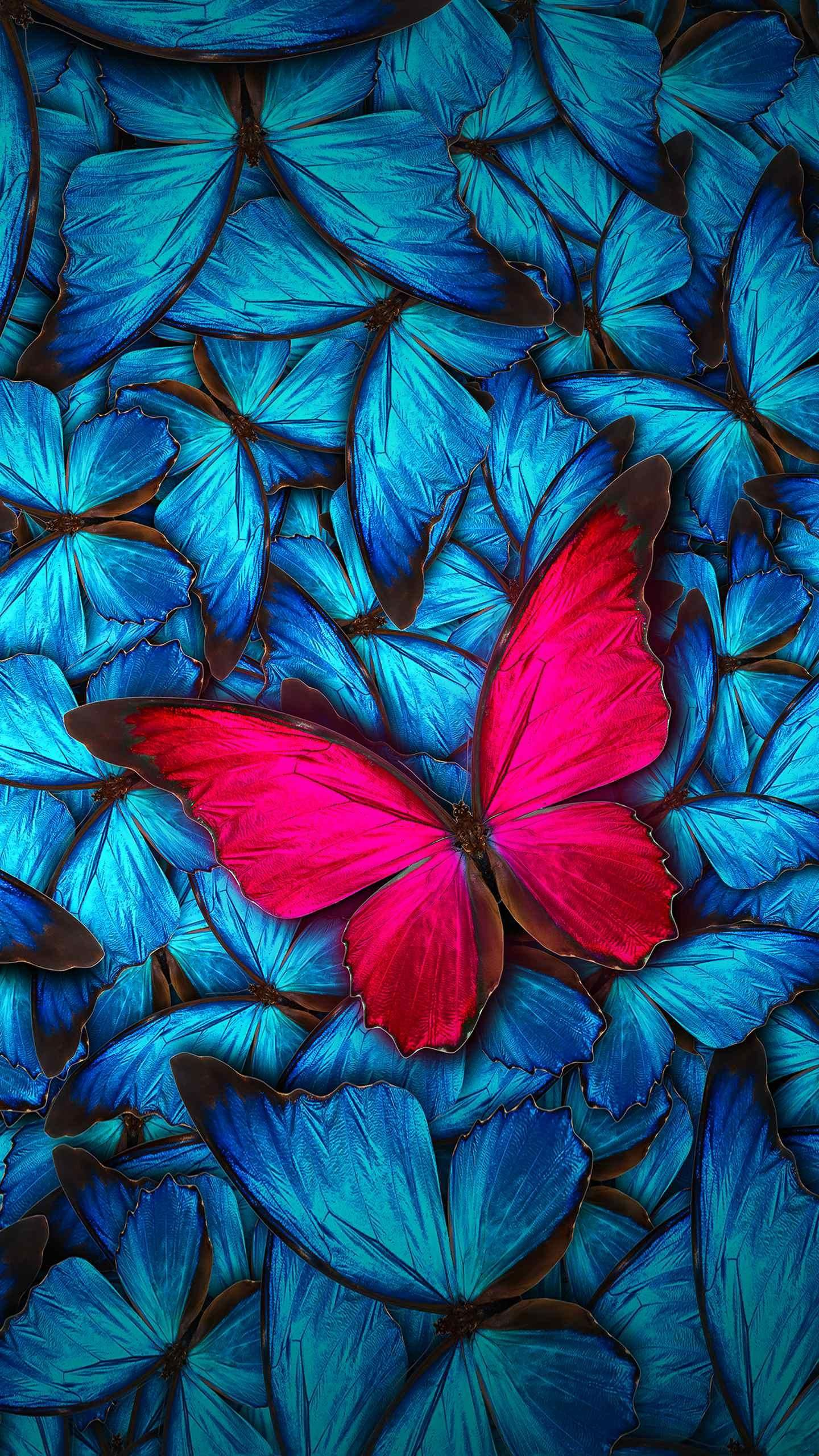 Butterfly. (With images) Butterfly wallpaper, Cute