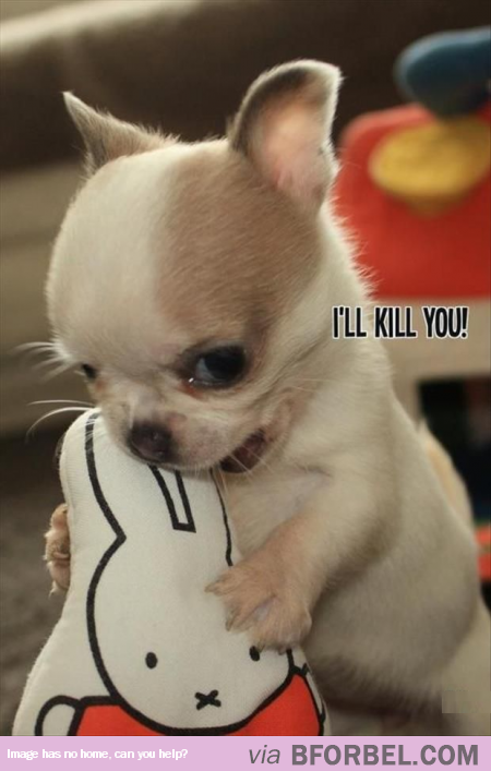 Puppy Just Got Scary…   Cute   Pinterest   Scary, Animal ...
