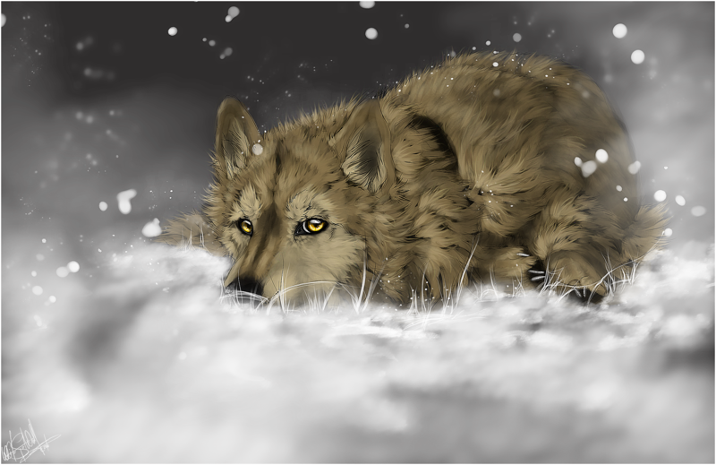 Wolf's Rain .Hige. by =WhiteSpiritWolf on deviantART