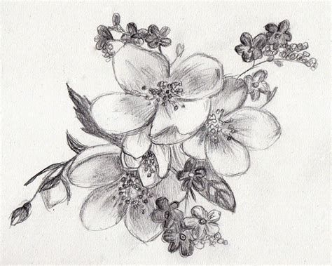 Image result for Pencil Drawings of Flowers | specific shoulder ...