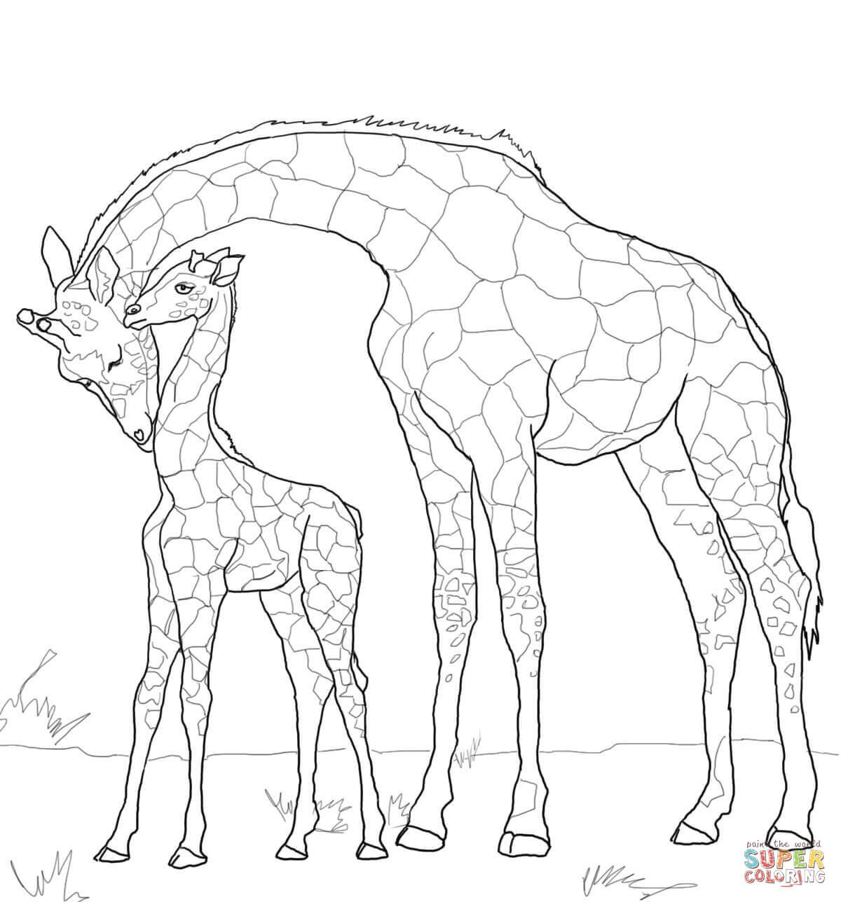 Baby Giraffe and Mother | Super Coloring | สวยๆ | Pinterest | Baby ...