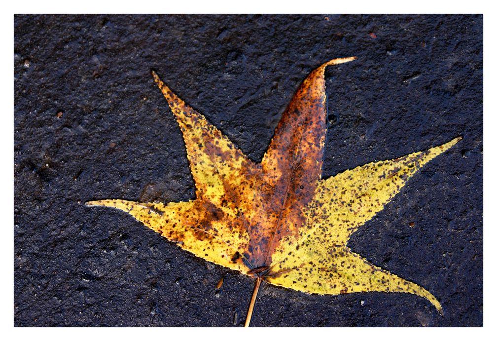 floating leaf 3