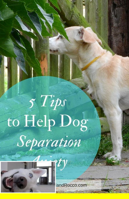 Clicker Training My Puppy Dogtraining And Dog Behavior Over