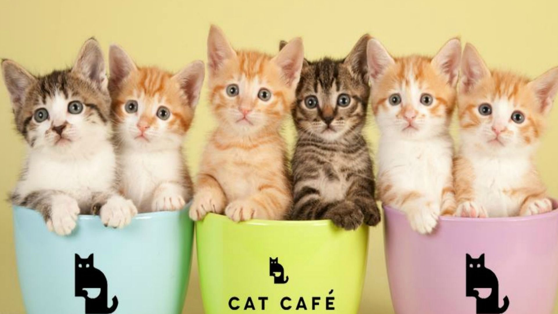 If You Love Cats And Coffee You Ll Want To Quit Your Job And Work At Manchester Cat Cafe Cat Cafe Cats World Cat