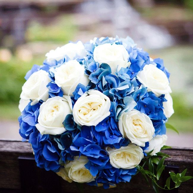 Blue and white bridal bouquet // Nicole Dixon Photographic ...