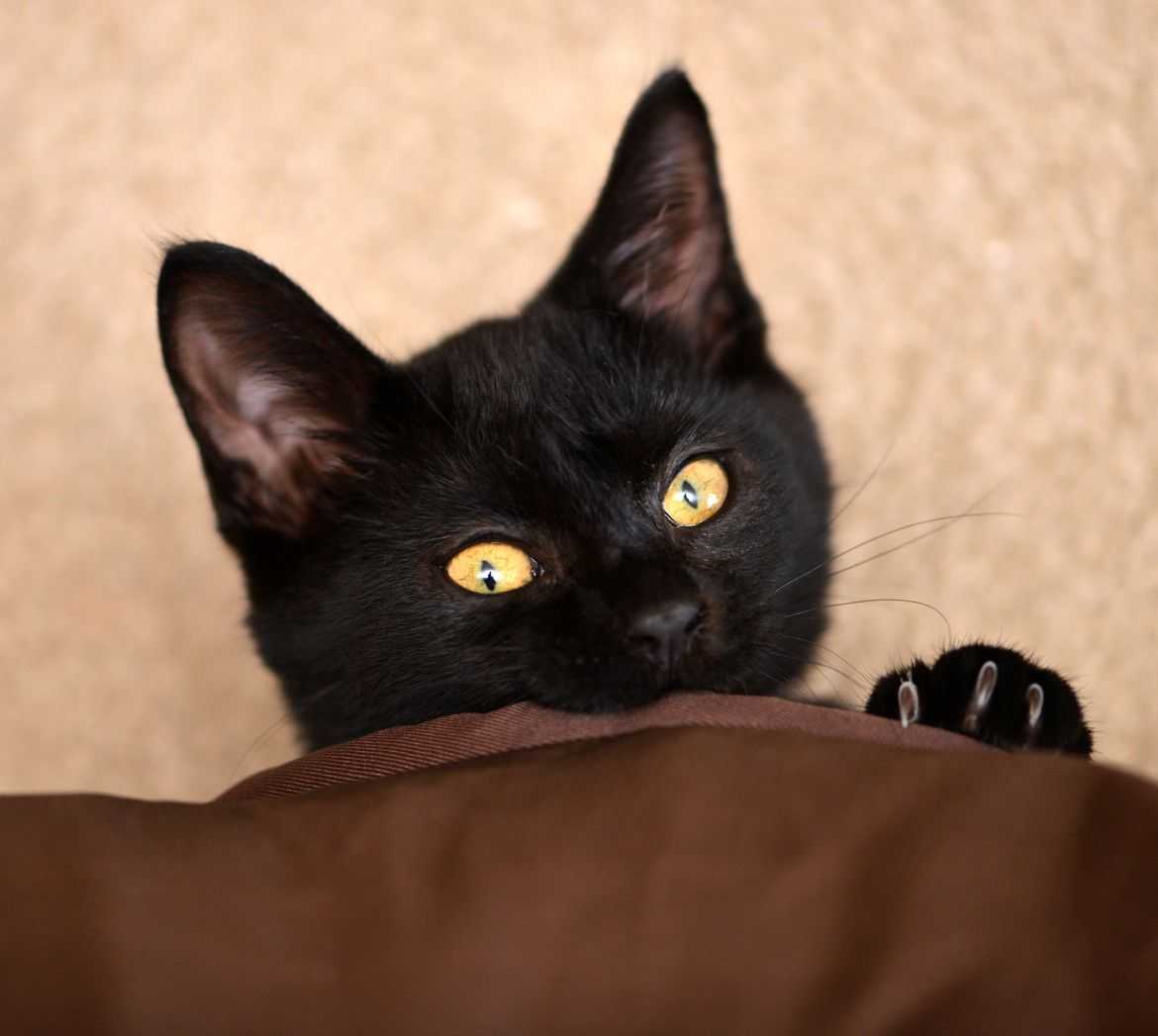 Black Cats pretty baby Anamils Pinterest