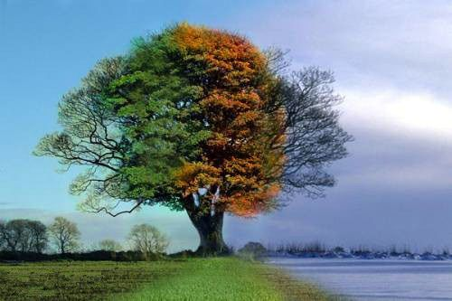 Four Seasons One Tree In 2020 Time Lapse Photography
