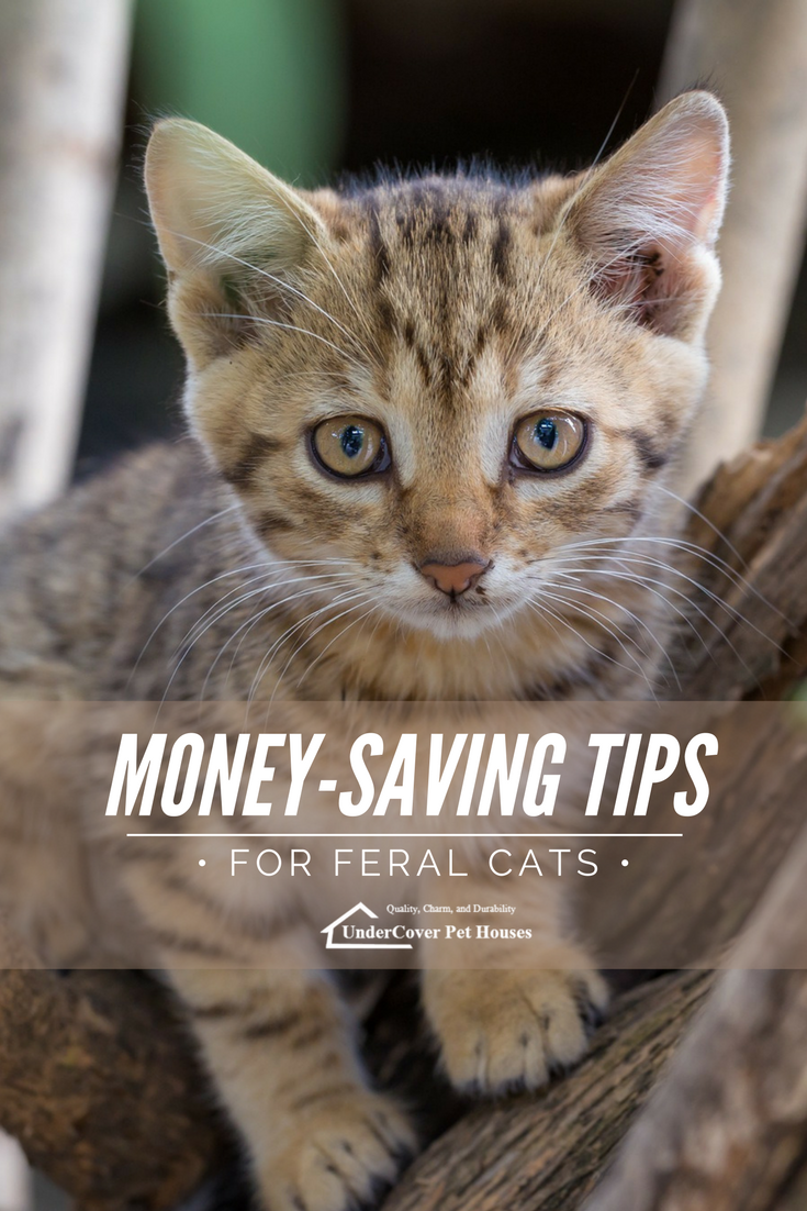 Helping feral cats can be a big investment Whether you assist one