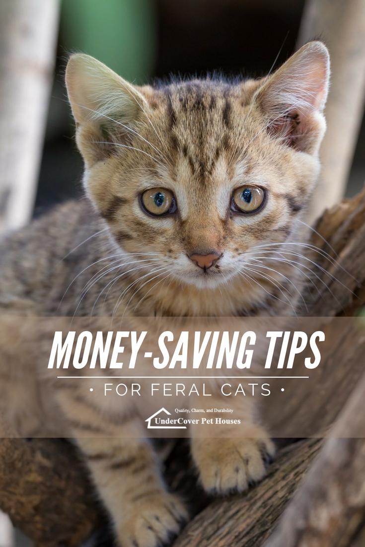 Feral Cat Rescue MoneySaving Tips Cats, kittens, Cute