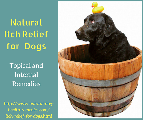 Itch Relief for Dogs Dog allergies remedies, Dog remedies