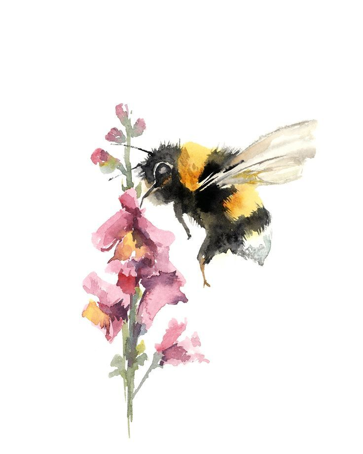 Bee on a pink flower art print watercolor painting art fine