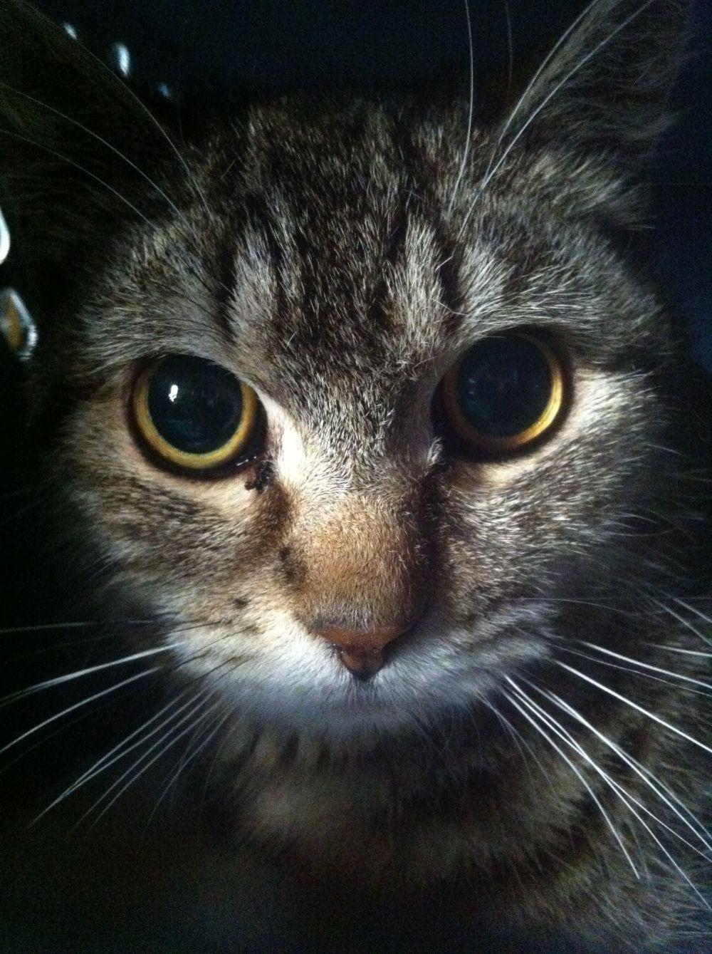 Raising wild cats Cats, Feral cats, Animals
