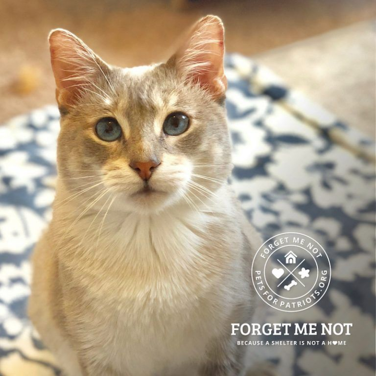 Hahn Was Abandoned And Now This Fetching Feline Is Looking For Love Cats And Kittens Cat Rescue Feline