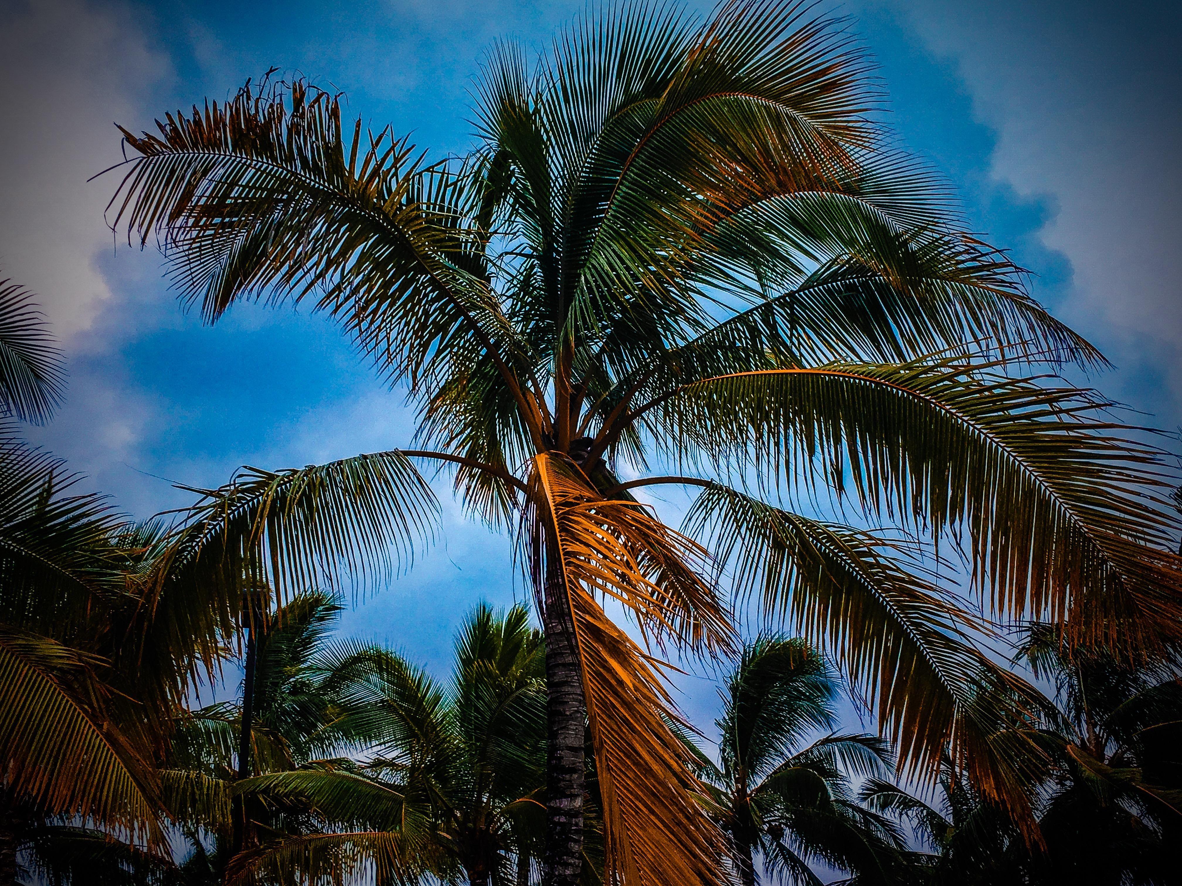 4032x3024] palm trees (oc) [2048x1536] /r/wallpapers want an ipad
