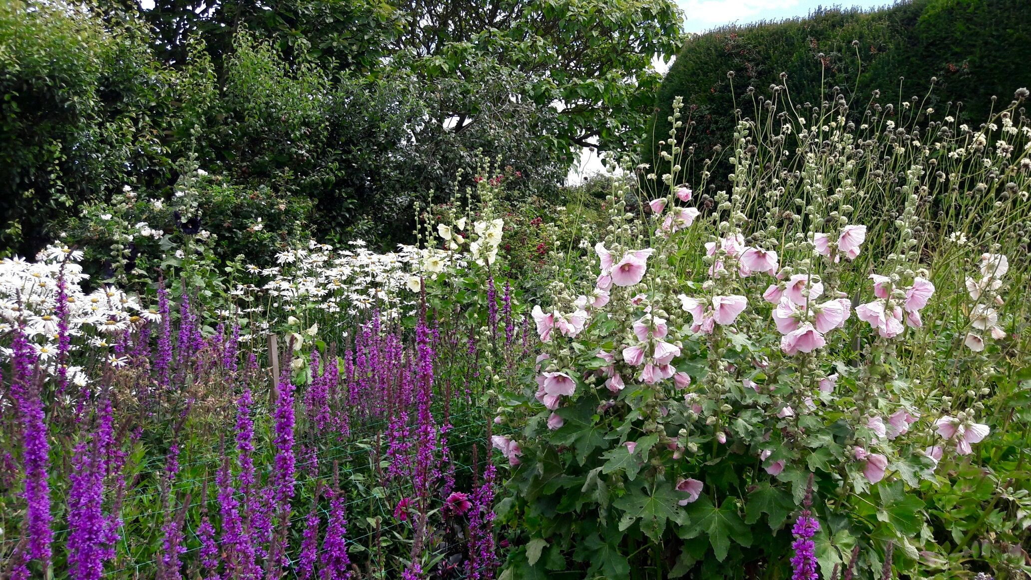 Walled garden Burton Agnes Yorkshire Perennial border ...