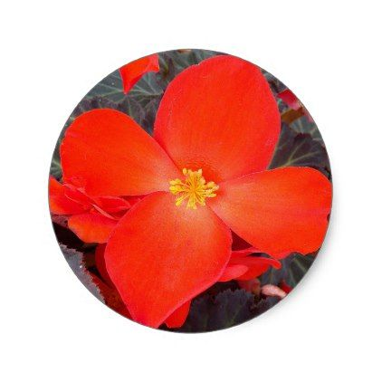 Red Begonia Floral Classic Round Sticker - red gifts color style cyo diy personalize unique