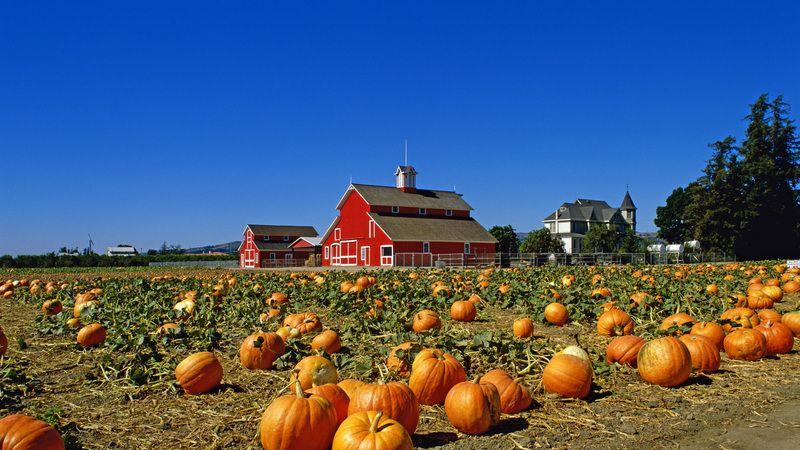 Pumpkin Farm Santa Paula California Pumpkin Farm Pumpkin Instagram Feed Ideas