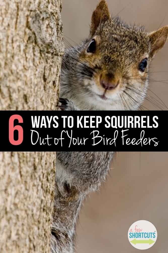 Create a squirrel proof bird feeder with these 6 tricks - How do you keep squirrels out of your garden ...