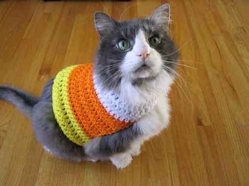 109 Cats In Sweaters   Pinterest   Schlau und Niedlich