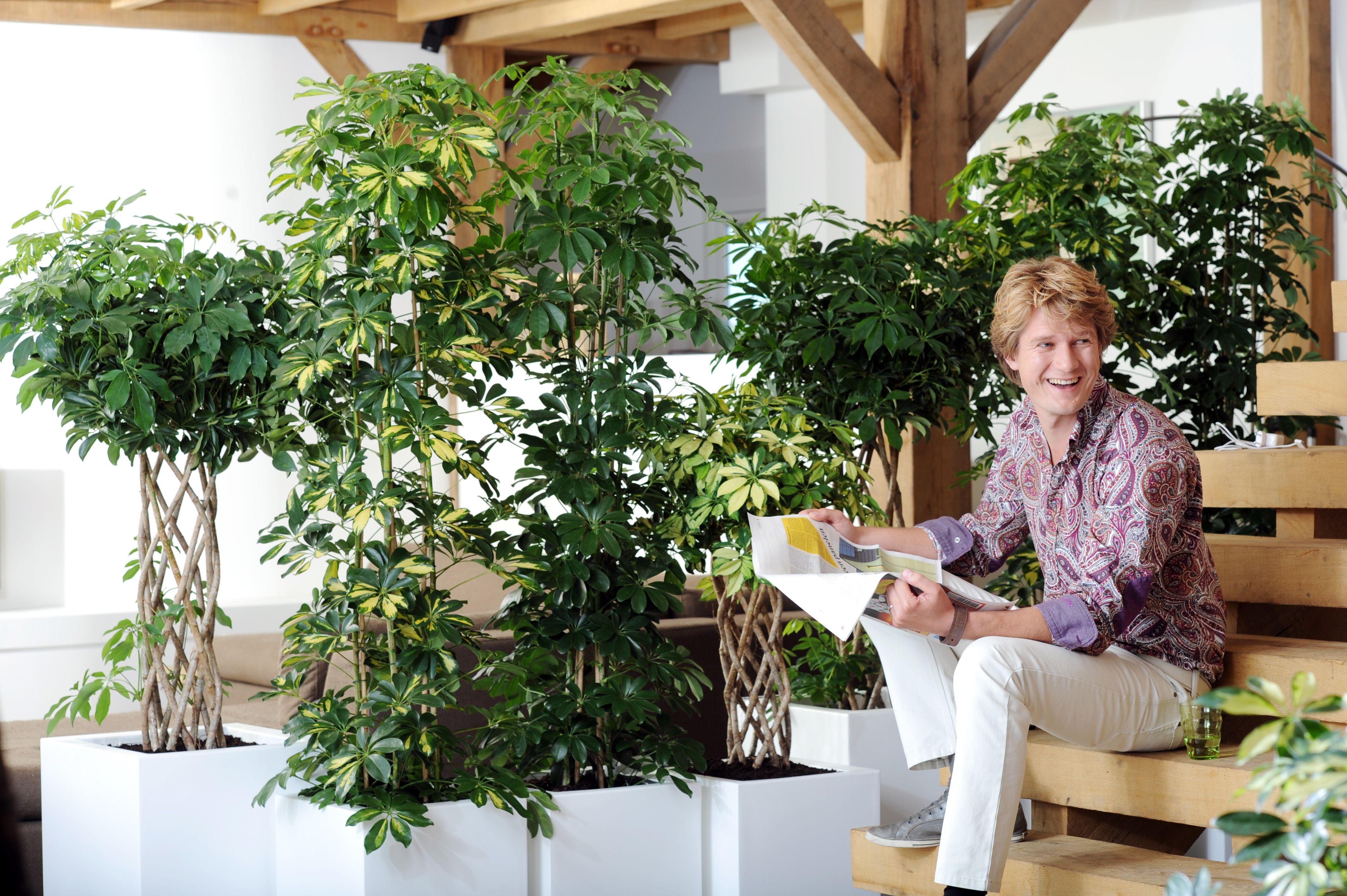 Schefflera House Plantssucculentscactusindoorseptemberprickly