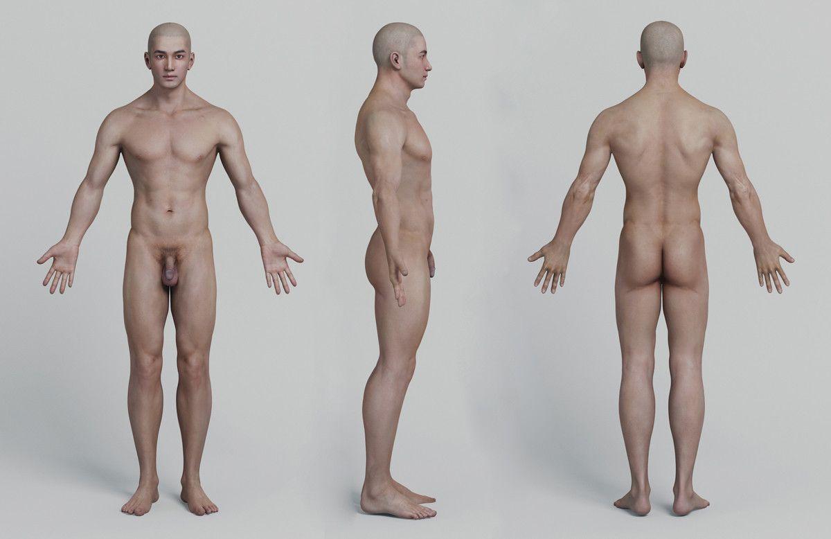 Human anatomy model, Emily ylscy on ArtStation at https://www ...