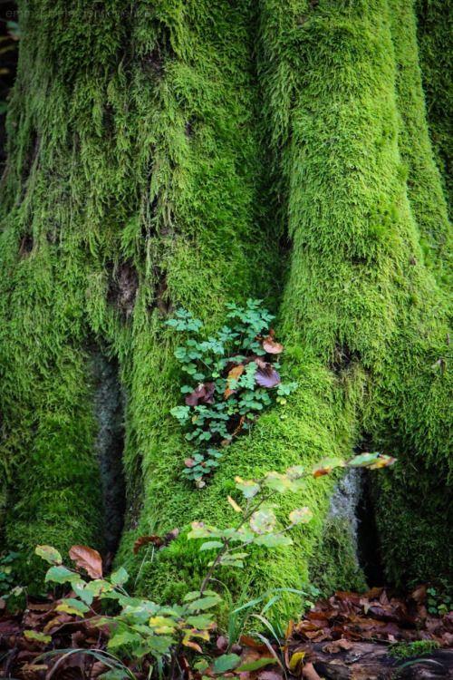 hinterdensiebenbergen:green