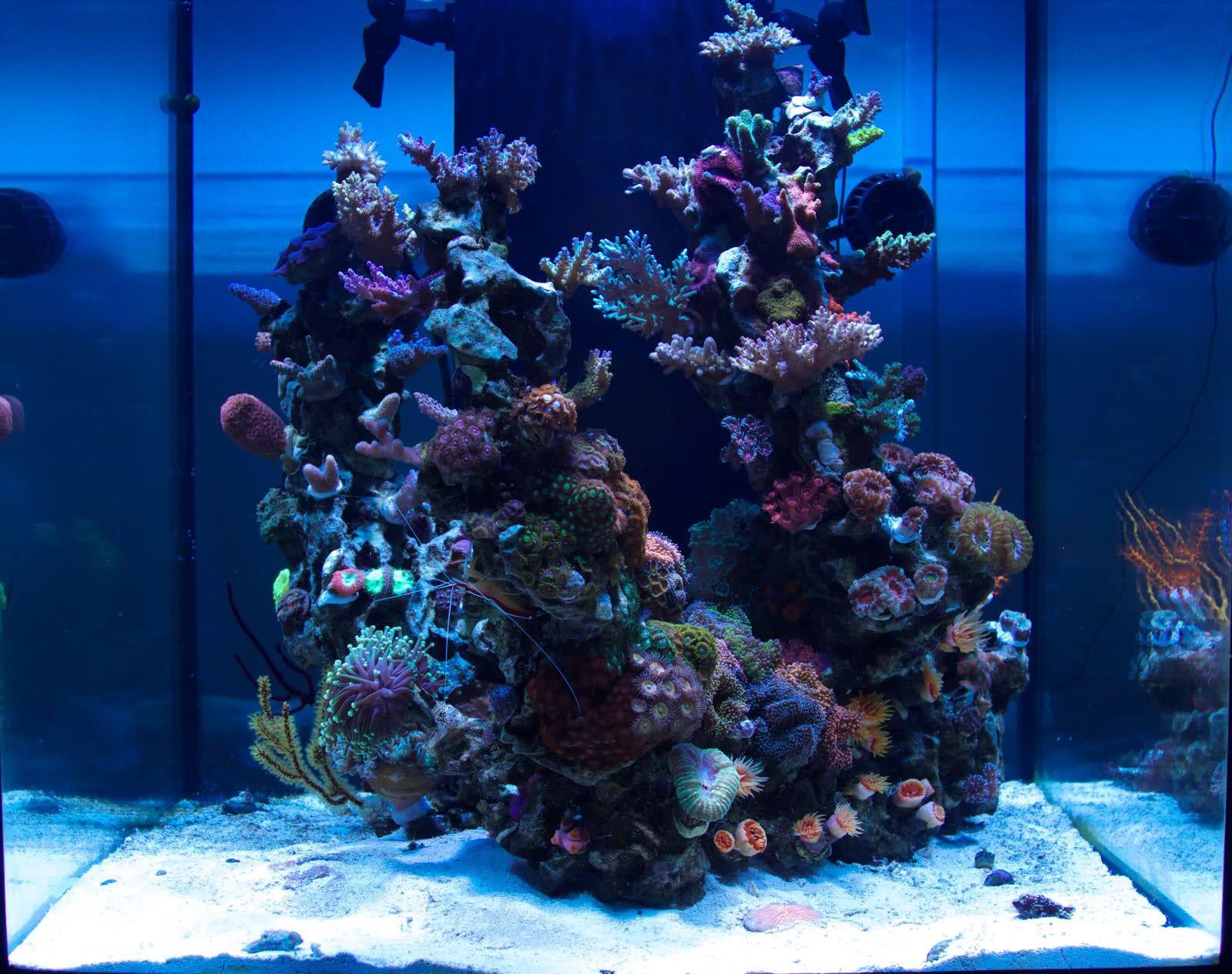 Medred 60g Nano Reef Saltwater Aquarium Saltwater Fish Tanks Coral Reef Aquarium