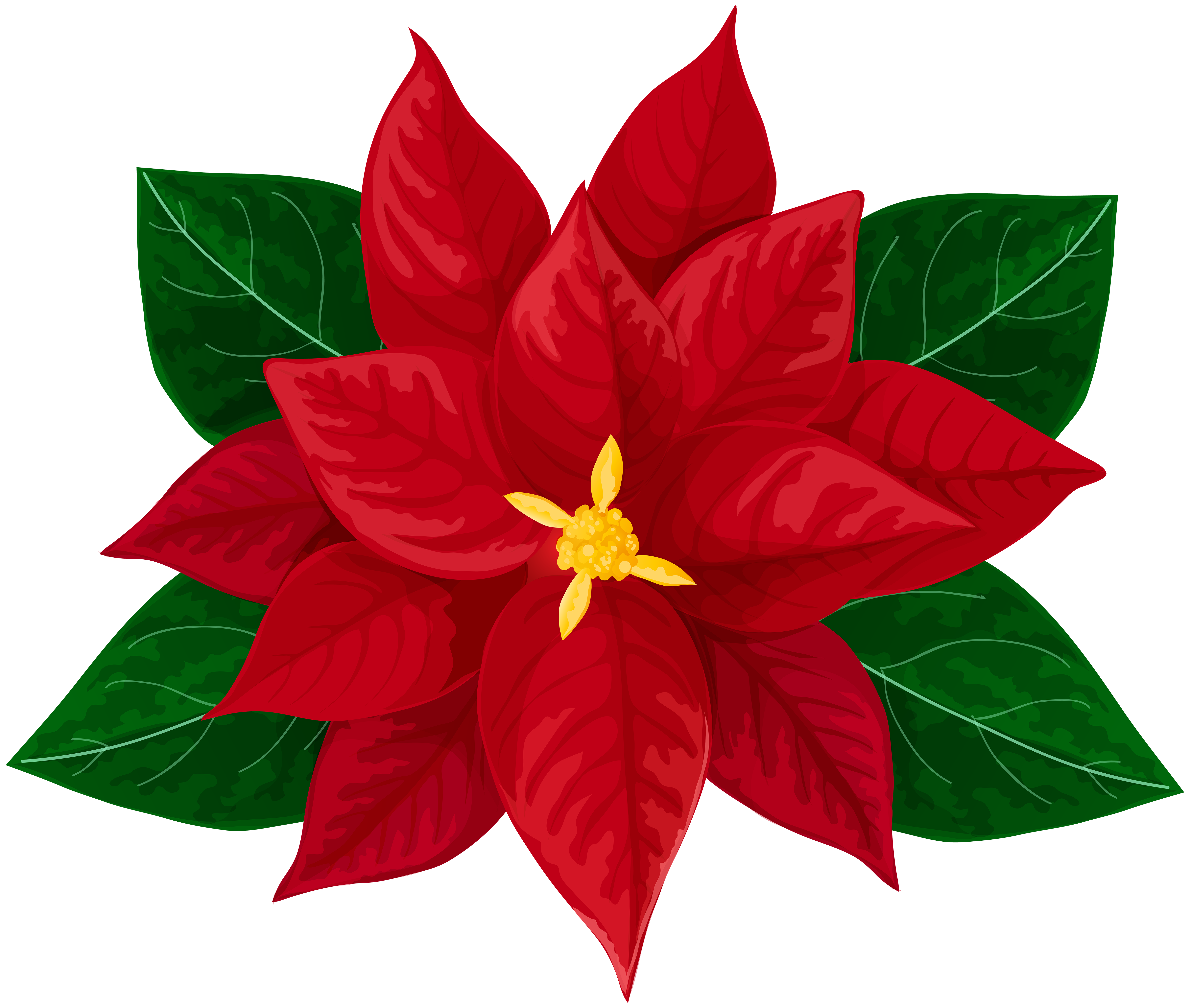 Poinsettia drawing. Download on ubiSafe Flower painting