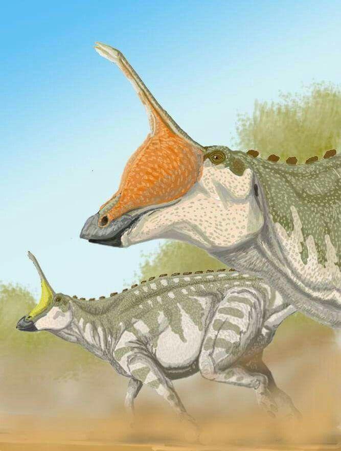 *Tsintaosaurus spinorhinus. Artwork by Juan Carlos Alonso.