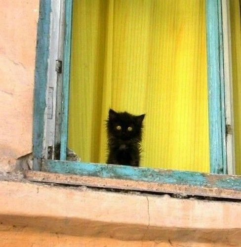 There always seems to be a kitten in the window.