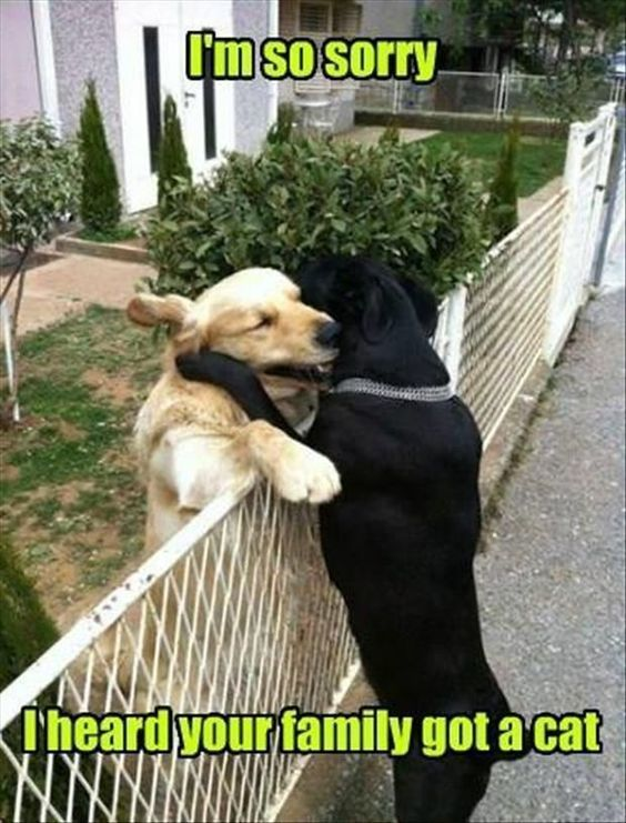 Latest Funny Dogs 101 Funny Dog Memes That May Make You Tinkle A Little dog memes / funny dog memes 4