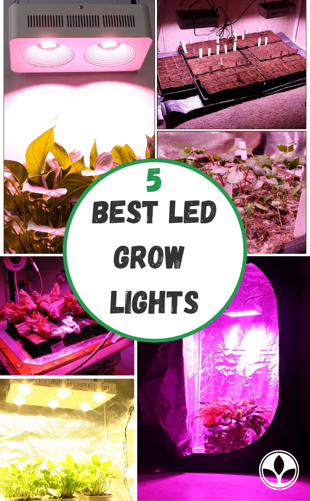 Best LED Grow Lights for a 4x4 Tent (Buying Guide)