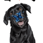 Labrador Farben Spielen Die Fellfarben Eine Charakteristische Rolle Welpen Kaufen Welpen Hund Und Katze