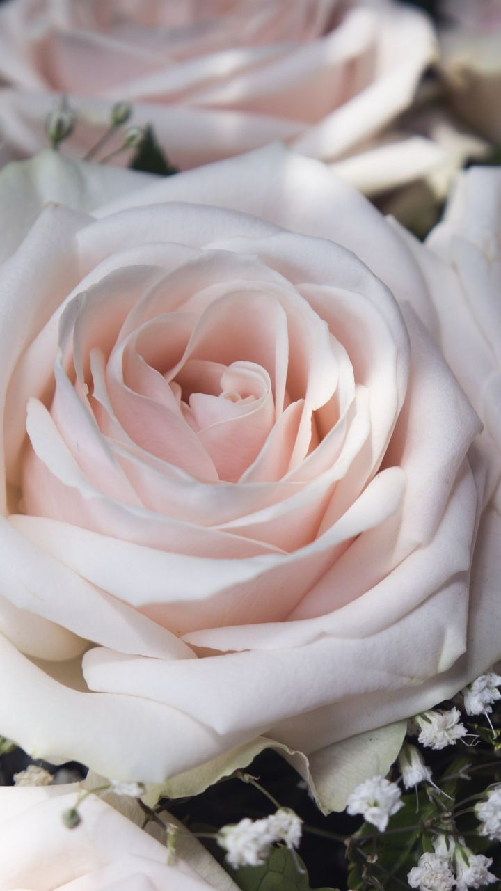 Light Pink Flowers Close Up Roses 720x1280 Wallpaper Natural