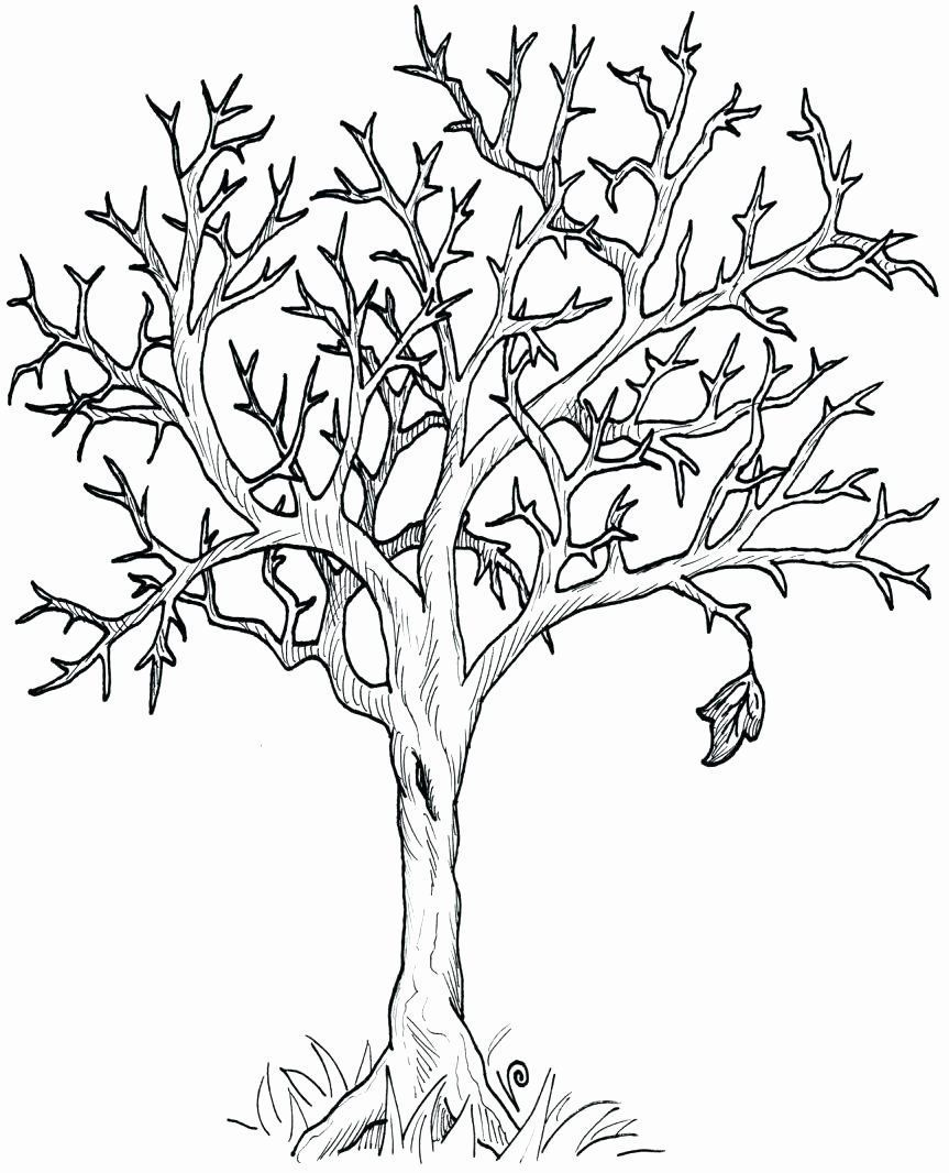 Fall Tree Coloring Page New Fall Trees Drawing At Getdrawings Coloring Drawing Coloring In 2020 Tree Coloring Page Leaf Coloring Page Fall Leaves Coloring Pages