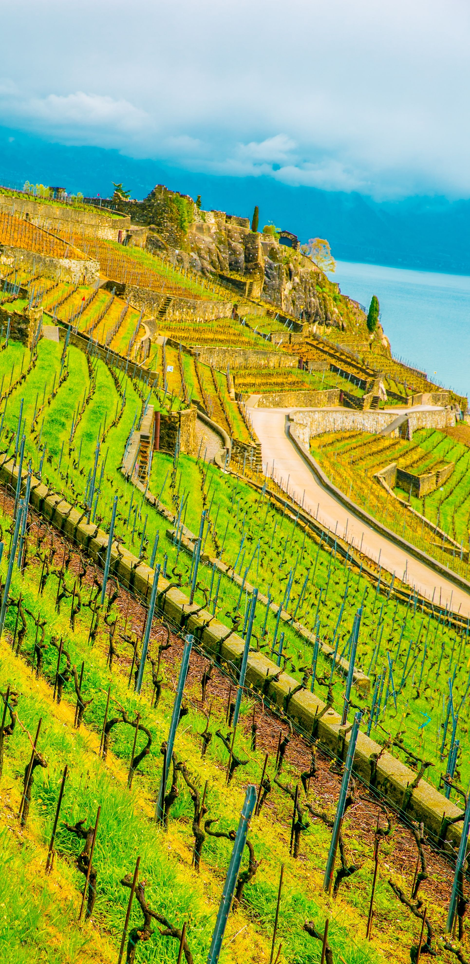 Chexbres vineyards wineries lake geneva swiss alps 10