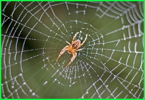 43 Hewan Vertebrata Dan Invertebrata Beserta Gambarnya Terbaru
