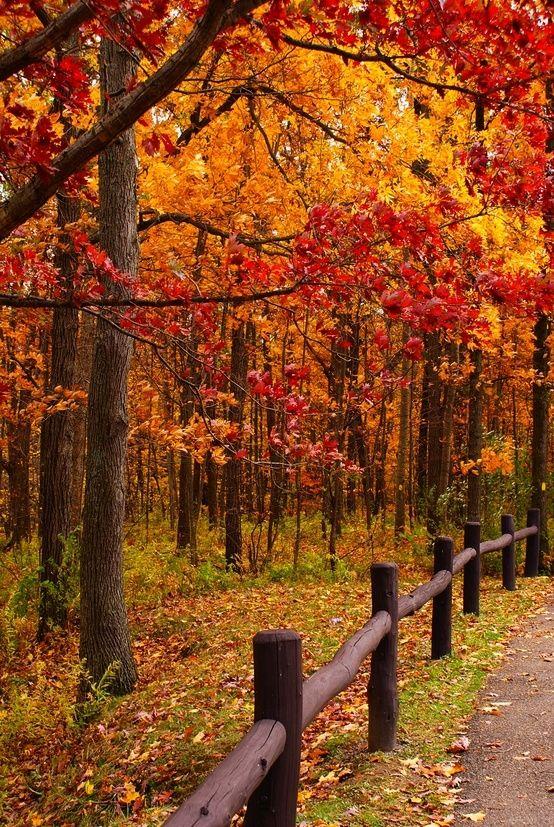 Colores de otoño, Indiana