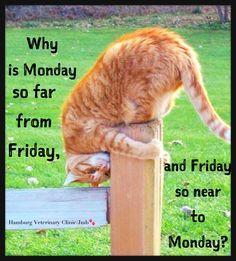 Resultado de imagem para have a great week ahead + cats